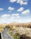 Wetland Stock Photography
