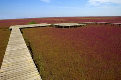 Wetland wooden bridge Royalty Free Stock Photo