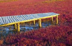 Wetland wooden bridge Stock Images