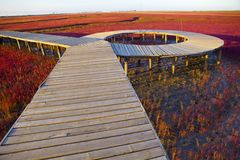 Wetland wooden bridge Stock Photography