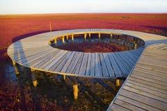 Wetland wooden bridge Royalty Free Stock Image