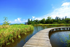 Wetland wooden path in summer Stock Image