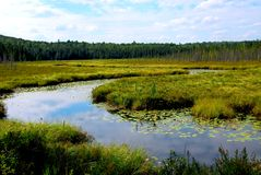Free Wetlands Royalty Free Stock Photos - 1192218
