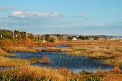 Wetlands Stock Images