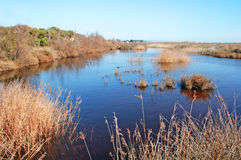 Wetlands. A view of wetlands in Torredembarra, catalonia, spain royalty free stock photos