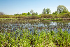 Wetlands Royalty Free Stock Photo