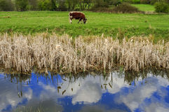 Wetlands Royalty Free Stock Photography