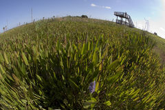 Wetlands. Fisheye distortion view of sunny wetlands with an observation desk Stock Images