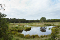 Wetlands. Area in Australia in preservation and protected area stock images