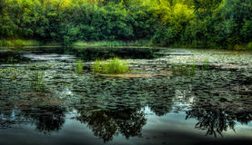 Wetlands Stock Photography
