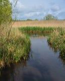wetlands Стоковые Изображения