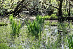 wetlands Стоковые Фото