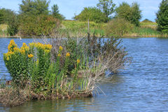 Wetlands. Scenic wetlands in British Columbia Canada stock image
