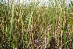 wetlands Стоковые Изображения RF
