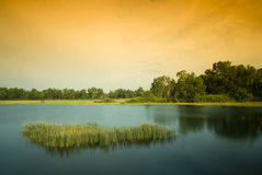 Wetlands Stock Photos