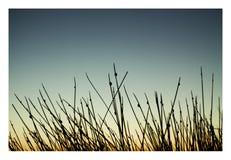 wetlands Стоковые Фотографии RF