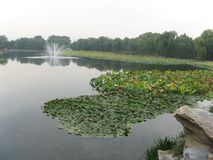 wetlands Fotografia Stock Libera da Diritti