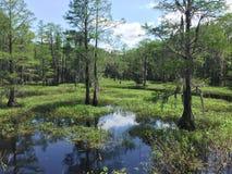 wetlands Imagen de archivo