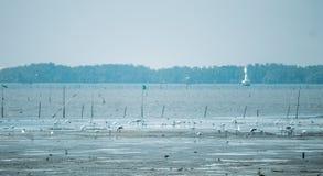 wetlands Immagini Stock