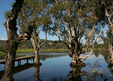 Wetlands. Conservation, Queensland, Australia Royalty Free Stock Photos