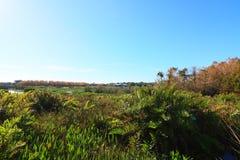 wetlands Стоковое Фото