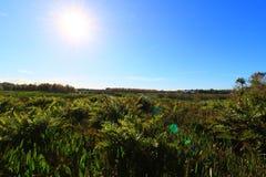 wetlands fotos de stock