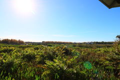 wetlands imagem de stock royalty free