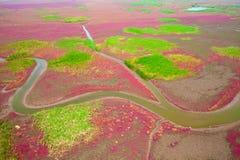 Wetlands. Aerial view of lush coastal wetlands Royalty Free Stock Photos