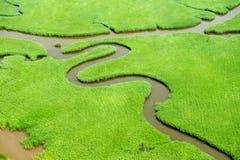 Wetlands Royalty Free Stock Photos
