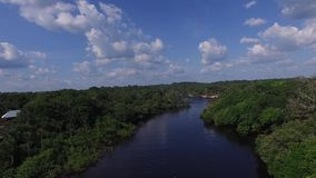 Wetlands in Amazon, Brazil, South America stock video footage