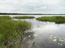 Wetlands around Coba Stock Photo
