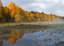 Wetlands in autumn. Stock Photography