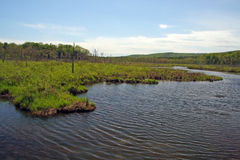 Wetlands, Berkshires Royalty Free Stock Photography