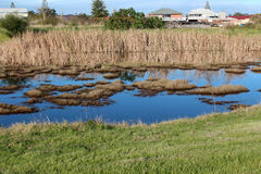 Wetlands at Big Swamp Bunbury Western Australia in late winter. Royalty Free Stock Photos