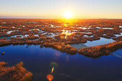 The wetlands biome sunset Royalty Free Stock Image