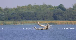 Wetlands with birds. Wetlands with white birds on the water on a sunny day stock video footage