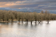 Wetlands at Columbia River Gorge. High Water on Wetlands at Columbia River Gorge Oregon stock photo