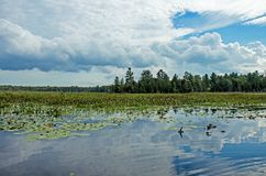 Wetlands With Cumulus Clouds In The Distance royalty free stock photography