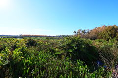 Wetlands. In Delray beach, Florida, Palm beach Royalty Free Stock Photos
