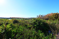 Wetlands. In Delray beach, Florida, Palm beach Royalty Free Stock Images