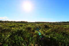 Wetlands. In Delray beach, Florida, Palm beach Stock Photography