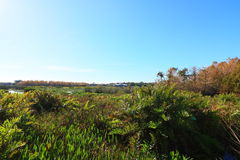 Wetlands. In Delray beach, Florida, Palm beach Stock Photo