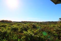 Wetlands royalty free stock image