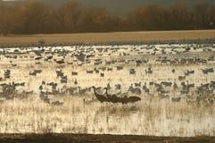 Wetlands stock photos