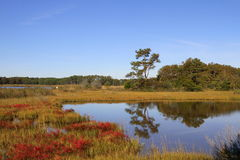 Wetlands during the fall. Royalty Free Stock Photos