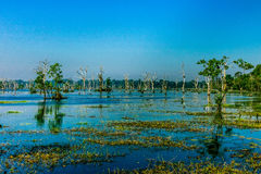 Wetlands at floated temple, Siem Reap, Cambodia Royalty Free Stock Images
