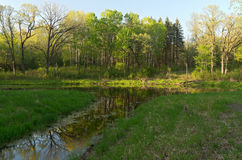 Wetlands and Forest of Battle Creek Royalty Free Stock Image