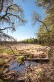 Wetlands and Forest Stock Image