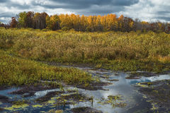 Wetlands and glowing aspen Royalty Free Stock Images