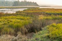 Wetlands grasslands along the sound stock images